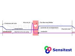 El ciclo menstrual con el pico de LH y la temperatura basal